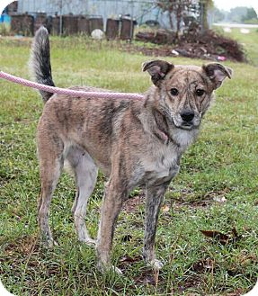 Shepherd (Unknown Type) Mix Dog for adoption in Sagaponack, New York - Sarina