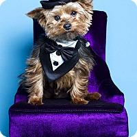 Adopt A Pet :: Oscar - Baton Rouge, LA