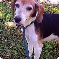Adopt A Pet :: Posey - Metamora, IN
