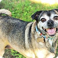 Adopt A Pet :: Sandy - Emmett, MI