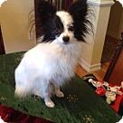 Adopt A Pet :: Tallulah (in New York)