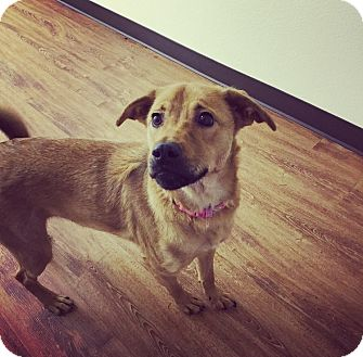 German Shepherd Dog Mix Dog for adoption in Seattle, Washington - Sasha