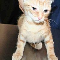 Adopt A Pet :: ALICE - Aurora, IL