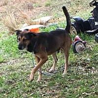 Adopt A Pet :: Jackson - Boerne, TX