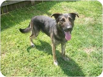 German Shepherd Dog Mix Dog for adoption in Belvidere, Illinois - Riley
