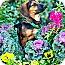 Photo 3 - Dachshund/Beagle Mix Dog for adoption in Houston, Texas - Charlene