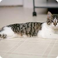 Adopt A Pet :: Cricket - Shelton, WA