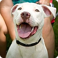 Adopt A Pet :: Petey - Fort Valley, GA