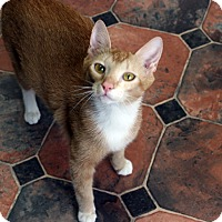 Domestic Shorthair Cat for adoption in Republic, Washington - Brier