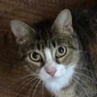 Adopt A Pet :: Sheba - Mobile, AL