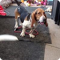Adopt A Pet :: Moe - Albuquerque, NM