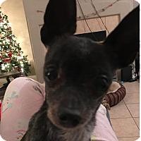Adopt A Pet :: Ripley2 aka Petey - Las Vegas, NV