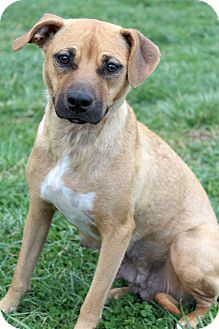 Terrier (Unknown Type, Medium) Mix Dog for adoption in Waldorf, Maryland - Yana