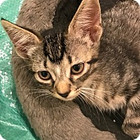 Adopt A Pet :: Xander - Riverside, CA