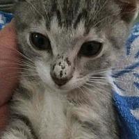 Adopt A Pet :: Tater - La puente, CA
