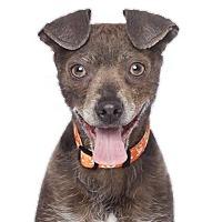 Adopt A Pet :: Guy - Los Angeles, CA