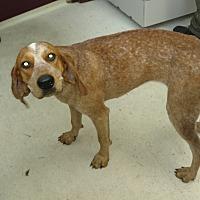 Adopt A Pet :: 37717 - Franklin, GA