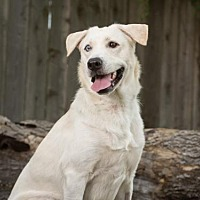 Adopt A Pet :: Blue - League City, TX
