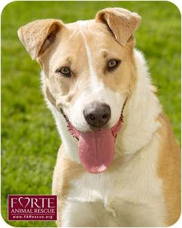 Collie/Terrier (Unknown Type, Medium) Mix Dog for adoption in Marina del Rey, California - Cookie