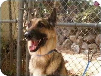 German Shepherd Dog Mix Dog for adoption in El Cajon, California - Keema