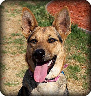 Shepherd (Unknown Type) Mix Dog for adoption in Fort Worth, Texas - Kara