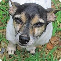 Adopt A Pet :: Jimmy - Suffolk, VA