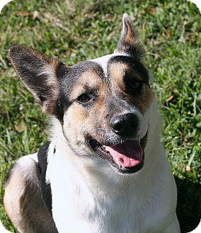 Border Collie/Catahoula Leopard Dog Mix Dog for adoption in San Leon, Texas - Aspen