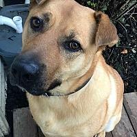 Adopt A Pet :: Trumbull - Bruce Township, MI