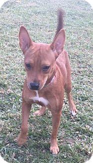 Terrier (Unknown Type, Medium) Mix Dog for adoption in Boca Raton, Florida - Keela