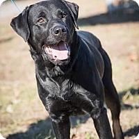 Adopt A Pet :: Thor - Madionsville, KY
