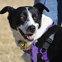 Adopt A Pet :: Millie - Tempe, AZ
