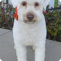 Adopt A Pet :: Clive BB - Seattle, WA