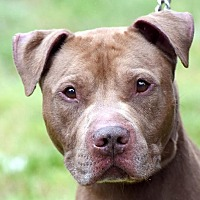 Adopt A Pet :: RED - New Haven, CT