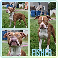 Adopt A Pet :: Fisher - Steger, IL