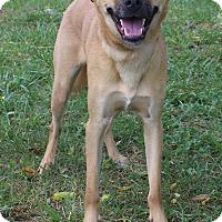 Adopt A Pet :: Kylo - Waldorf, MD