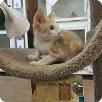 Adopt A Pet :: REX - Fort Walton Beach, FL