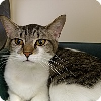 Adopt A Pet :: Turner 1 - Elyria, OH
