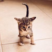 Adopt A Pet :: Hamm - Horn Lake, MS