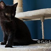 Adopt A Pet :: Frost -(& Sparks) - Arlington, VA
