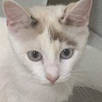 Adopt A Pet :: Basil - Marina del Rey, CA