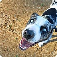 Adopt A Pet :: MOOSE-JJ - Roundup, MT