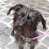 Adopt A Pet :: Audrey - Los Angeles, CA