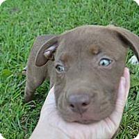 Adopt A Pet :: Willow - New Boston, MI