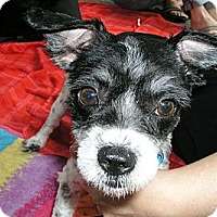 Adopt A Pet :: Jax - Santa Monica, CA