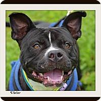 Adopt A Pet :: Parker - Memphis, TN