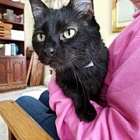 Adopt A Pet :: Dawson - Grand Ledge, MI