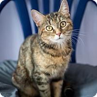 Adopt A Pet :: Lolita - East Norriton, PA