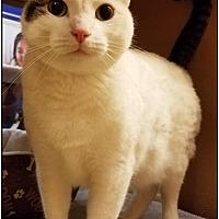 Adopt A Pet :: Franco - Upland, CA