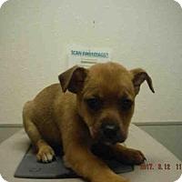 Adopt A Pet :: A574410 - Oroville, CA