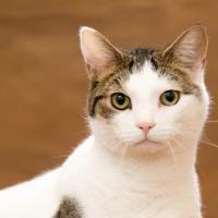 Adopt A Pet :: Mr. Uggles - Chesapeake, VA